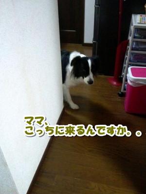 Cam00378_convert_20130130185844