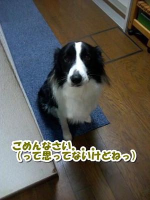 Cam00381_convert_20130130190018